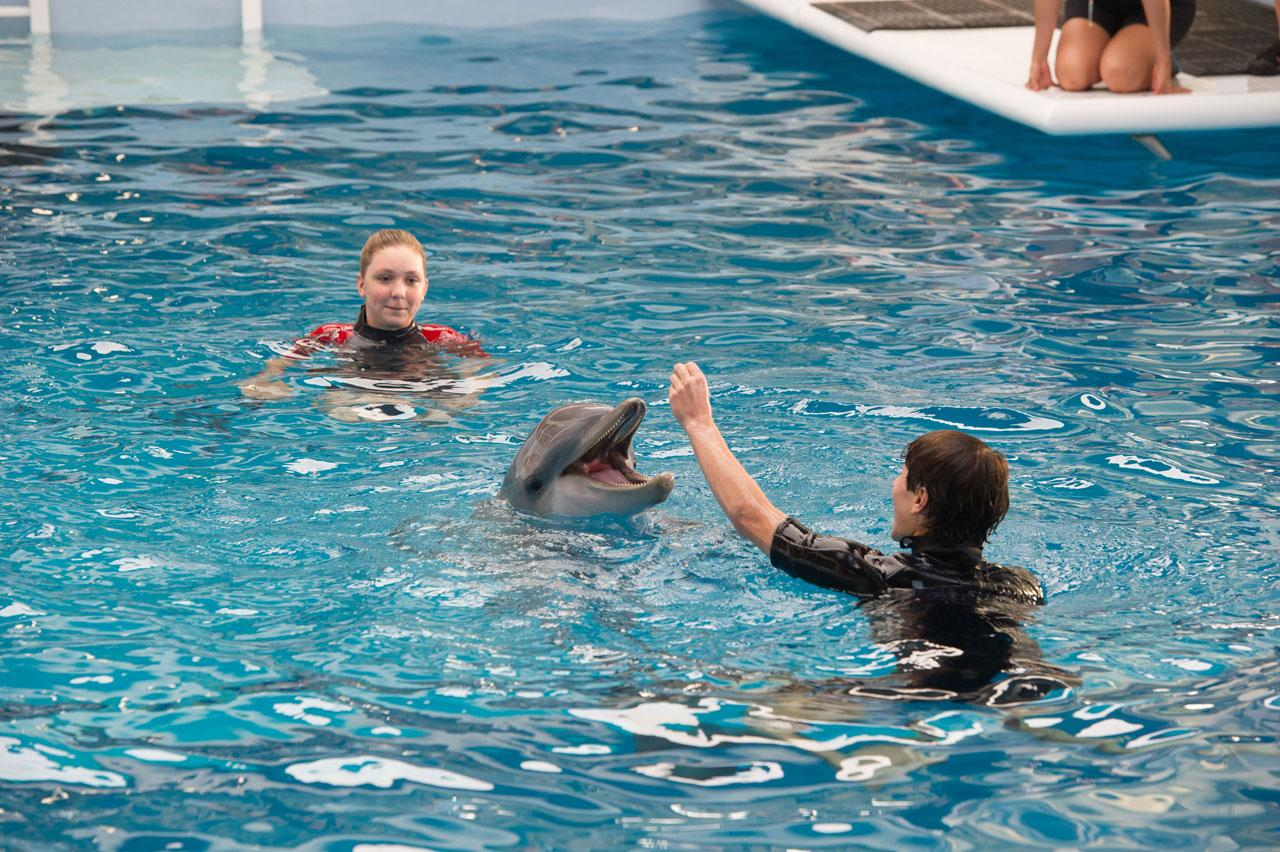 Dolphin Tale 2 | Cinema365